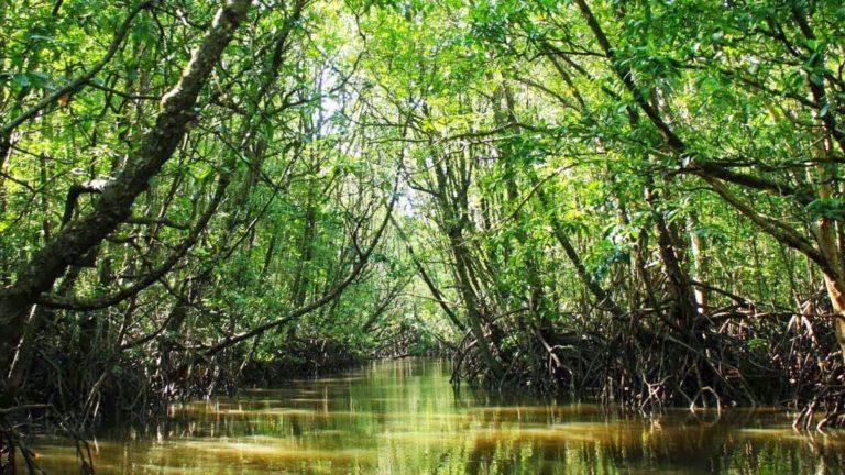 แนะนำ ที่เที่ยวป่าชายเลน บอกเลยว่าเหมาะมากกับสายคนชอบเที่ยวธรรมชาติสวย ๆ