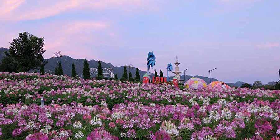 The Bloom by ทีวีพูล