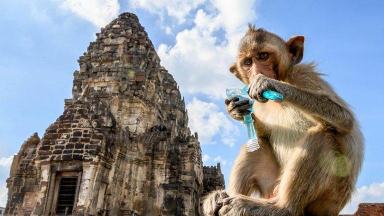 รวม ที่เที่ยวลพบุรี สถานที่เที่ยวทางประวัติศาสตร์ของประเทศไทย